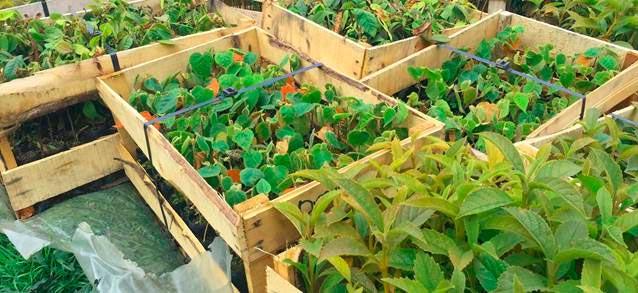 siembra-arboles-carrera-verde